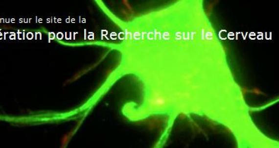Site de la Fédération pour la Recherche sur le Cerveau.