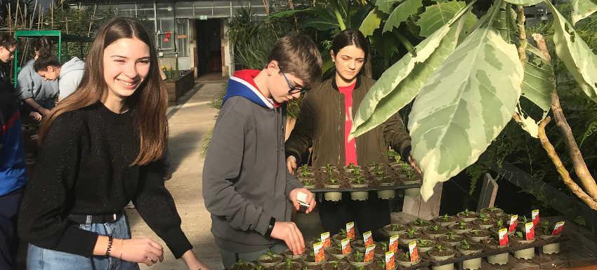 Des ollas pour les jardins éphèmères de la place Stanislas