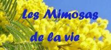 """L'action """"mimosas de la vie """" consiste à vendre du mimosas dans les hypers, supermarchés de la région."""